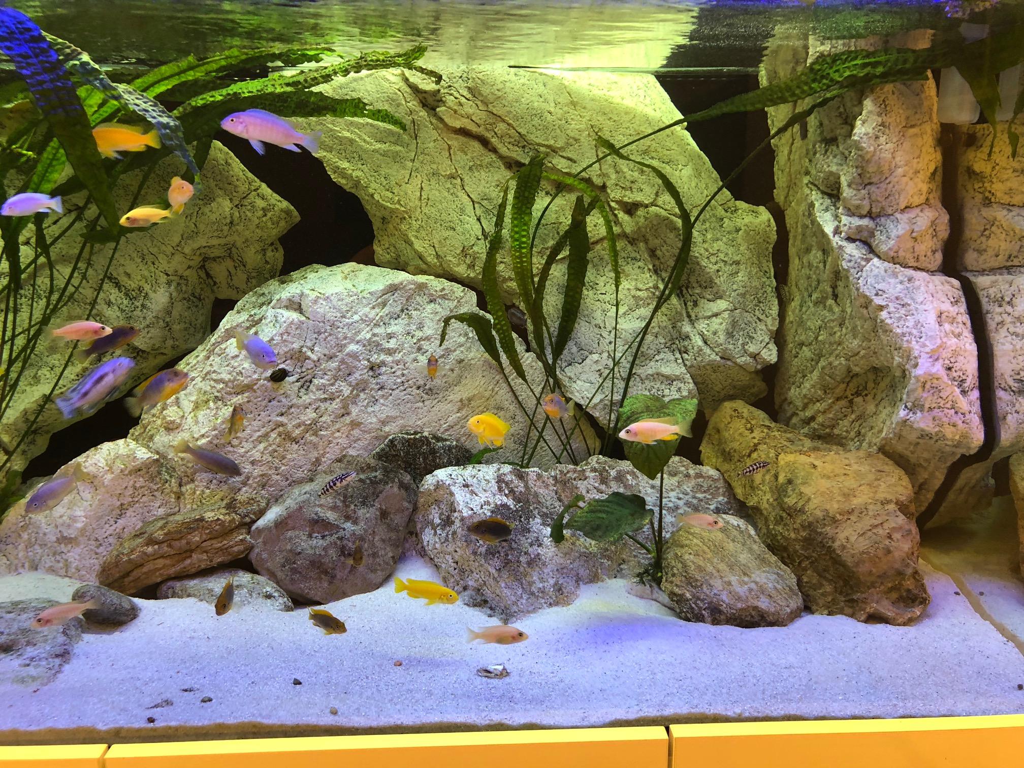 Akvarium na mieru ZA 5